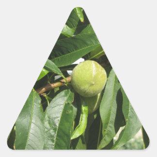 Sticker Triangulaire Deux pêches vertes non mûres accrochant sur un