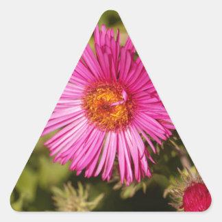 Sticker Triangulaire Fleur d'un aster de Nouvelle Angleterre