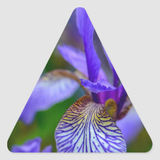 Sticker Triangulaire Iris barbu