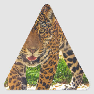 Sticker Triangulaire Jaguar