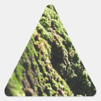 Sticker Triangulaire La mousse verte dans le détail de nature de la