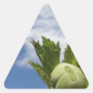 Sticker Triangulaire Noisette verte fraîche simple contre le ciel bleu