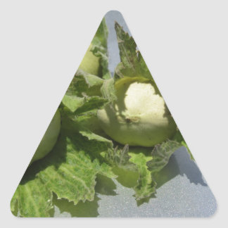 Sticker Triangulaire Noisettes vertes fraîches sur l'arrière - plan