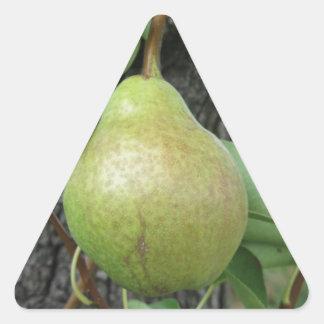 Sticker Triangulaire Poires vertes accrochant sur un poirier croissant