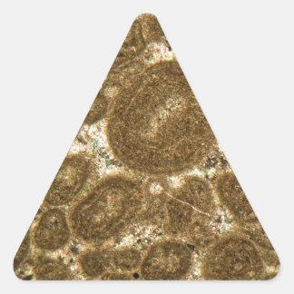 Sticker Triangulaire Section mince de chaux paléozoïque sous la MICR