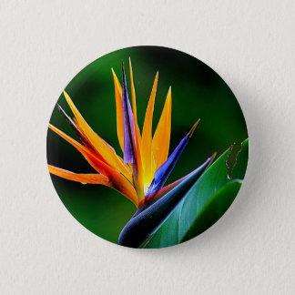 Strelitzia. Oiseau de fleur de paradis Badges