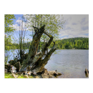 Stumped - lac marshall carte postale