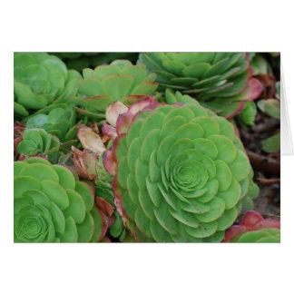 Succulents (blanc) cartes de vœux