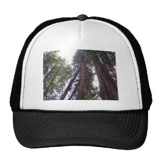 Sun par les séquoias casquette de camionneur