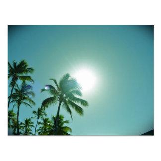 Sun tropical carte postale