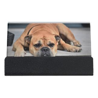 Support Carte De Visite Beau chien de bouledogue de Brown s'étendant sur