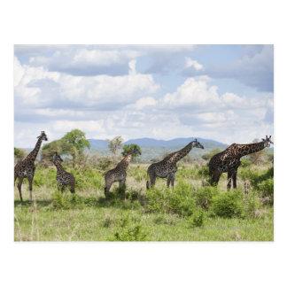 Sur le safari en parc national de Mikumi en Carte Postale