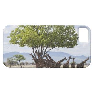 Sur le safari en parc national de Mikumi en Coque iPhone 5 Case-Mate