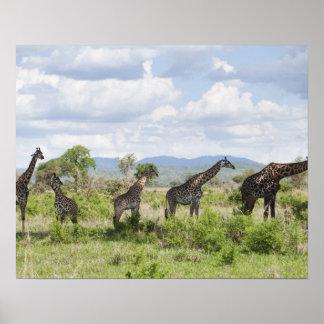 Sur le safari en parc national de Mikumi en Posters
