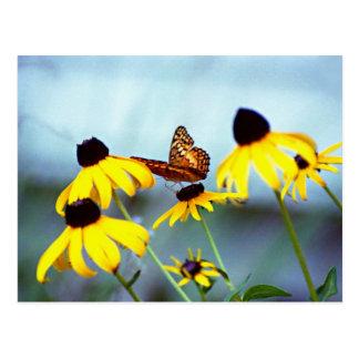 susan noir-eyed avec le papillon 1 carte postale