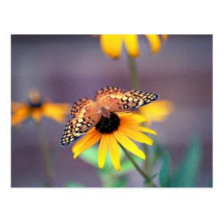 susan noir-eyed avec le papillon 3 cartes postales