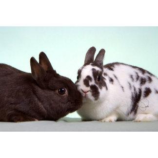 Bunny Rabbit Cards
