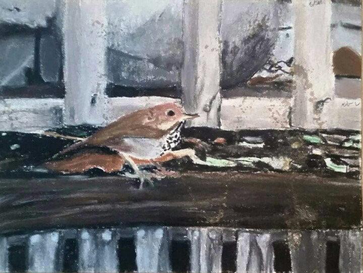 """Humboldt Sparrow"""