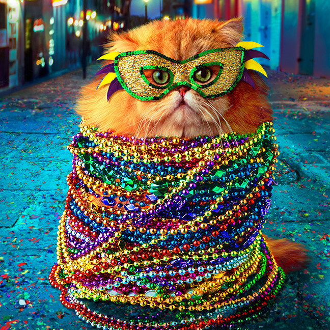 Funny Cat with Colorful Beads at Mardi Gras