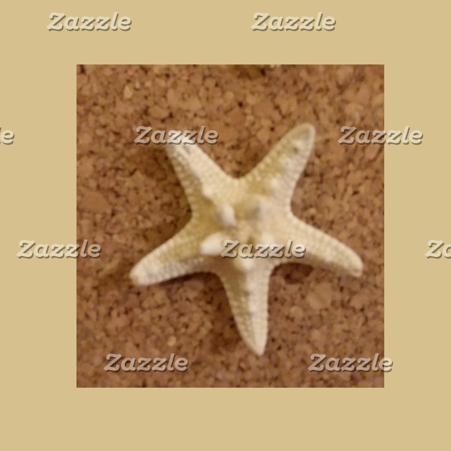 Seashell Starfish collection