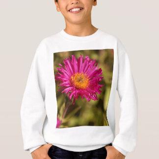 Sweatshirt Aster de Nouvelle Angleterre (angliae de novas de