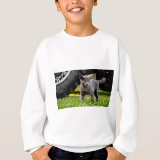 Sweatshirt Chaton bleu