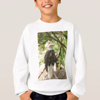 Sweatshirt Eagle chauve