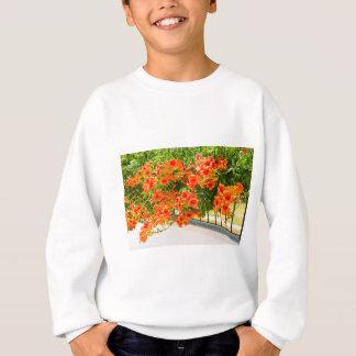 Sweatshirt Fleurs de floraison d'orange sur fence.JPG
