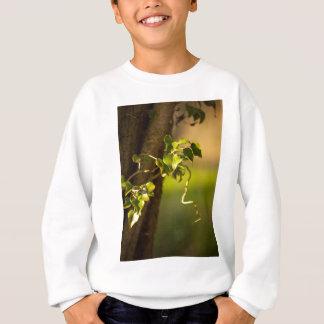 Sweatshirt ivy
