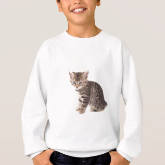 Sweatshirt kitten