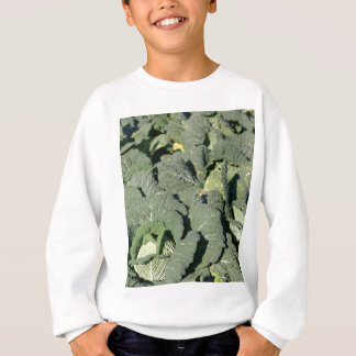 Sweatshirt Plantes de chou de Milan dans un domaine