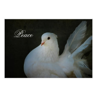 Symbole de paix de colombe de blanc poster