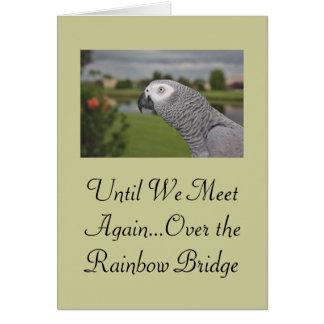 Sympathie d'animal familier de perroquet de gris a cartes