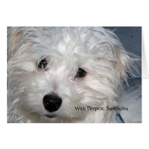 Sympathie d'animal familier - perte d'un chien cartes de