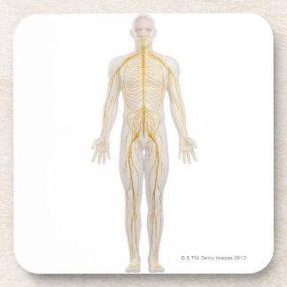 Système nerveux humain 2 sous-bocks