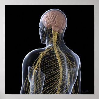 posters organes internes de corps humain de sant organes. Black Bedroom Furniture Sets. Home Design Ideas