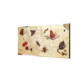 T31567 une étude de divers insectes, fruit et Anim Toiles
