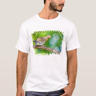 T-shirt adulte asiatica Blanc-à ailes de Zenaida de