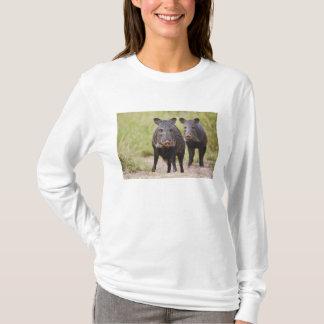 T-shirt Adultes colletés de tajacu de Pecari de Peccary),