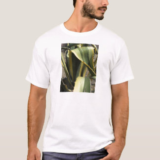 T-shirt Agave americana - Maguey