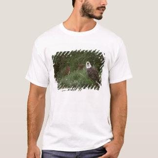 T-shirt Aigle chauve des Etats-Unis, Alaska, île