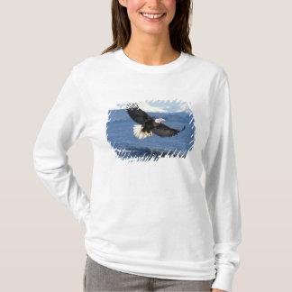 T-shirt aigle chauve, leuccocephalus de Haliaeetus, en vol