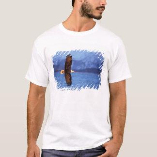 T-shirt aigle chauve, leucocephalus de Haliaeetus, en vol