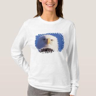 T-shirt aigle chauve, leucocephalus de Haliaeetus, tir