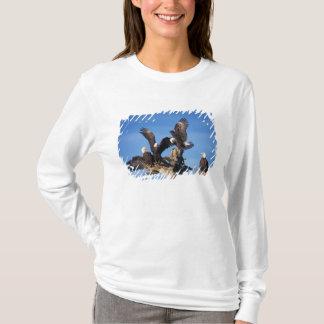 T-shirt aigles chauves, leuccocephalus de Haliaeetus,