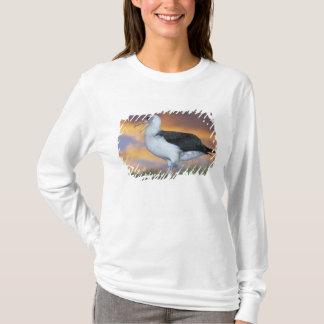 T-shirt Albatros Laysan, (immutabilis de Diomedea), les