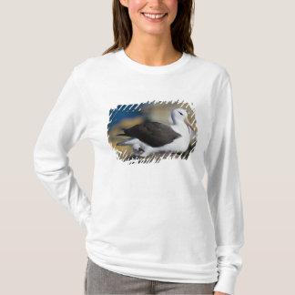 T-shirt albatros Noir-browed Thalassarche