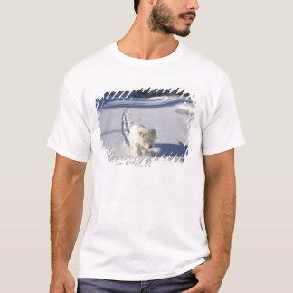 T-shirt Alberta, Canada