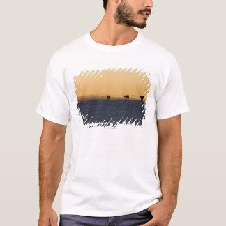 T-shirt Alberta, Canada 3