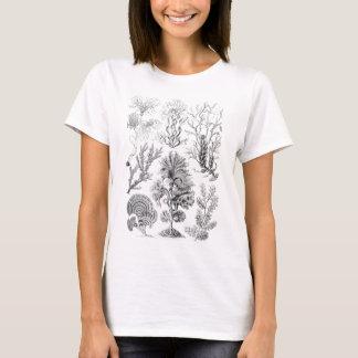 T-shirt Algues brunes